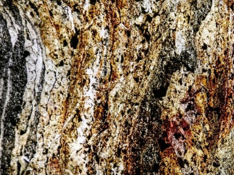 TRANSCULENT - MYCA